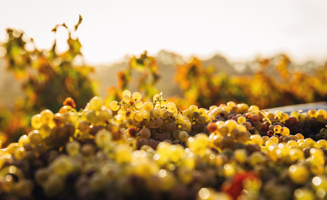 blog biologische wijn