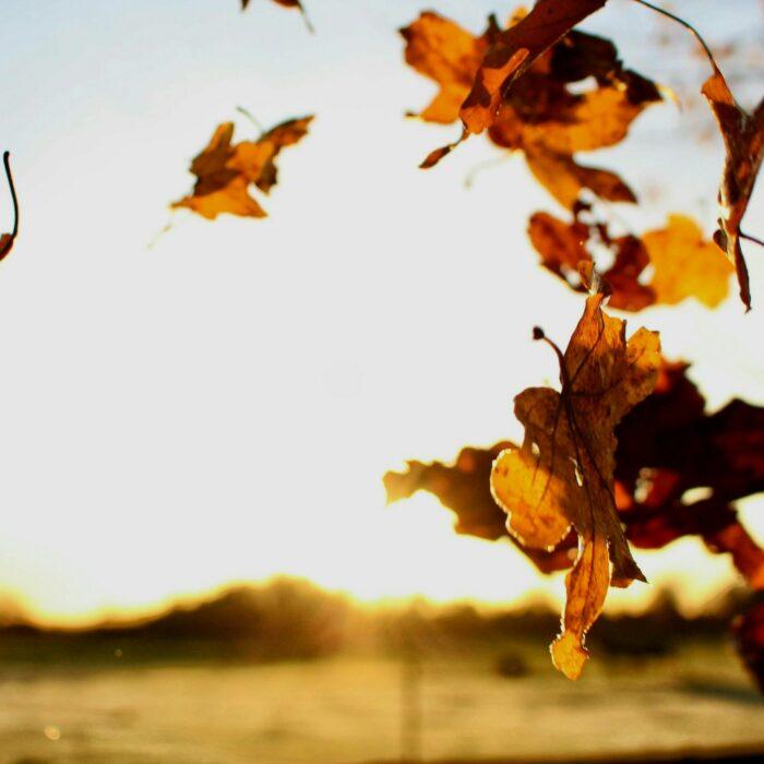 hvdw herfst
