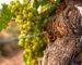 Wijnblog Oude Wijnstokken | Heeren van de Wijn
